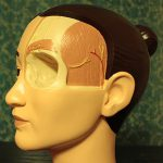 Model of human head for demonstration of surgery methods